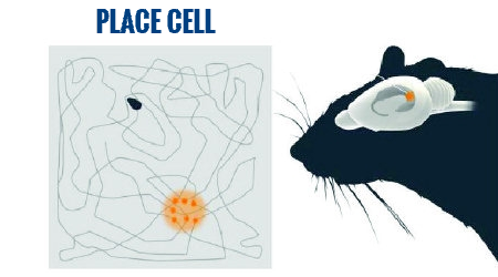 Place cell