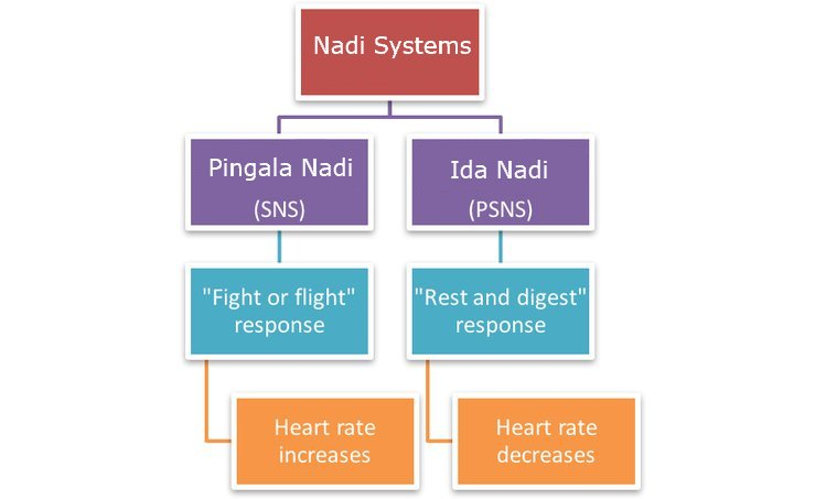 Ida Pingala and Hart rate variability
