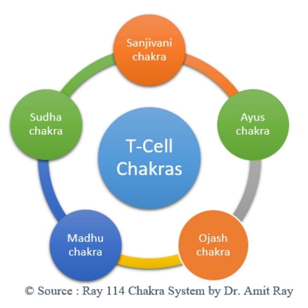 Immunity T-Cell Chakras Amit Ray Teachings