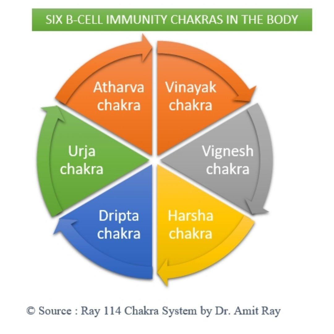 Six B-Cell Immunity Chakras Amit-Ray Teachings
