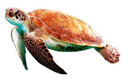 Tortoise Breathing