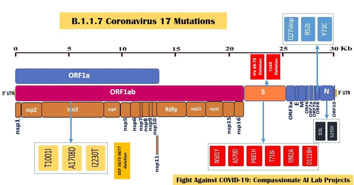B 1.1.7 Coronavirus Mutations and Genome Sequence