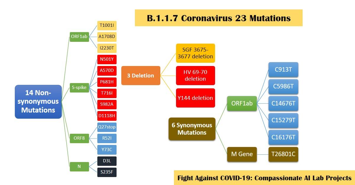 B 1 1 7 Coronavirus 23 Mutations